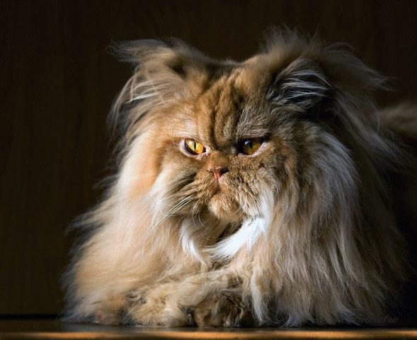 动物摄影-超级可爱的猫咪